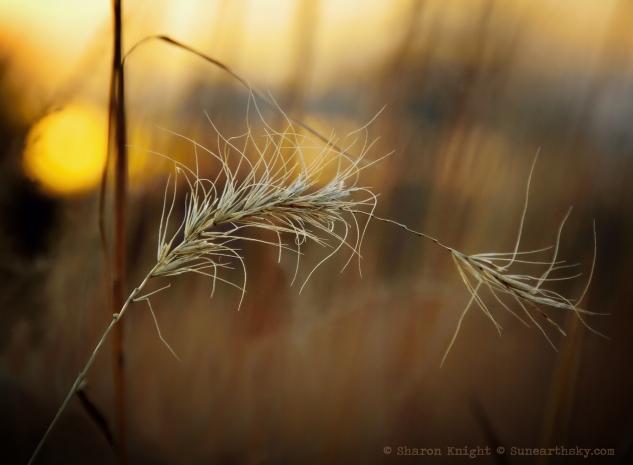 stalk and grass 2