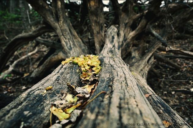 treefall 2