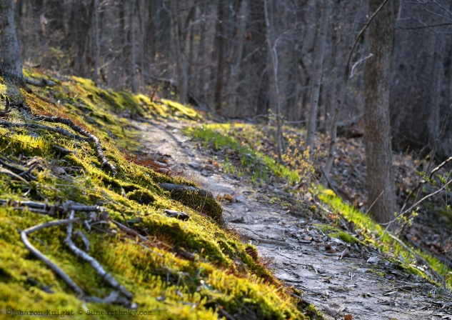 trail in the woods 2