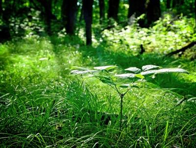 summer green 2