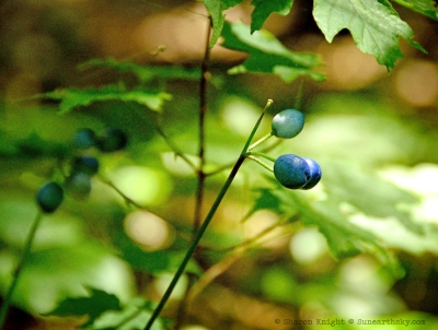 blue berries 2
