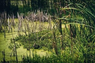 emiquon-late-summer-2