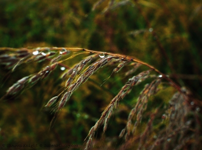 bluestem-tears-2