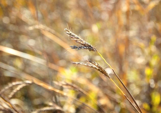 october-prairie-2