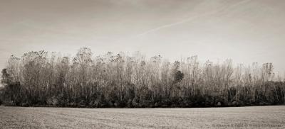 autumn-treeline-2