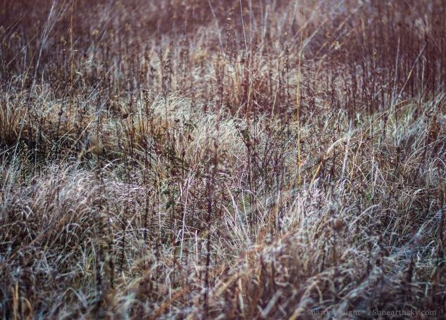 prairie-2