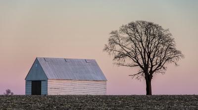 white-crib-and-tree-2