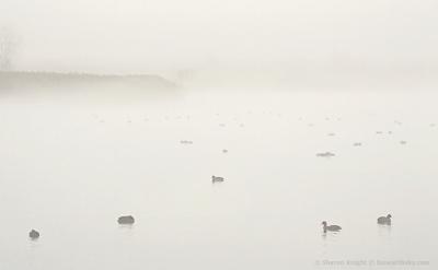 ducks-at-banner-marsh-2