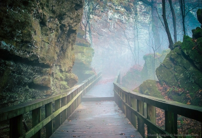 into-the-mist-2