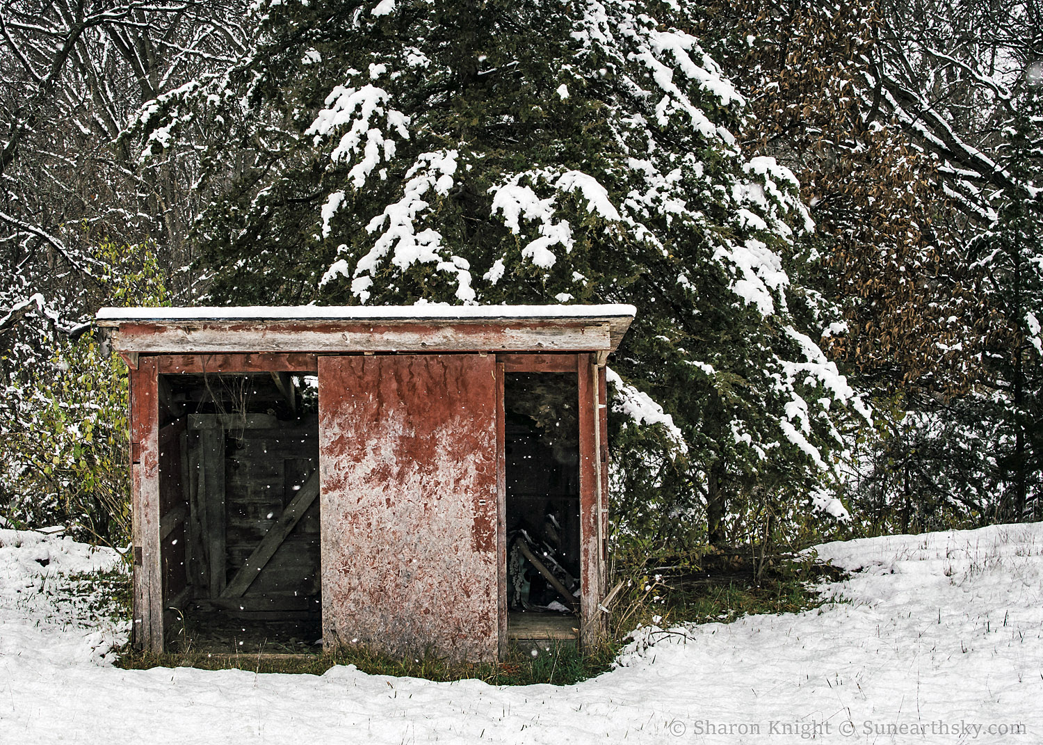 red-shed-and-pine-2