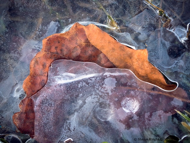 leaf-in-ice-2