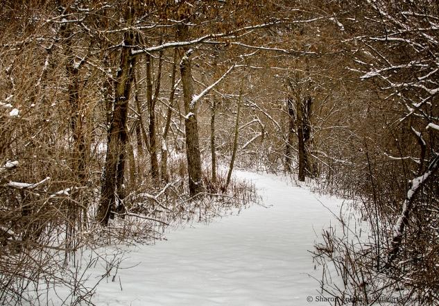 snowy-path-2