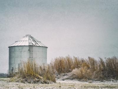 bin-and-grasses-in-snow-2