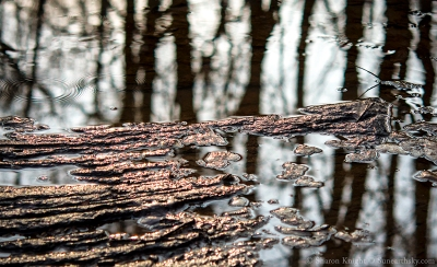 creek-reflections-in-a-hollow-2