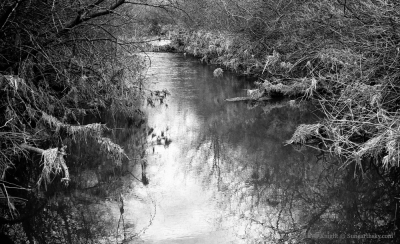 turtle-creek-2
